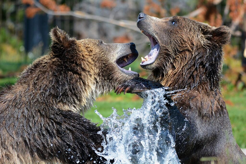 Tesla Government Bears Fighting.jpg